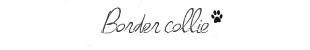 boerder-collie