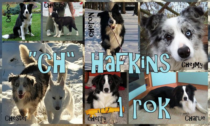 Hafkins CH
