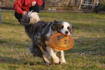Gina frisbee 113