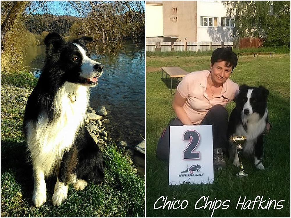 Chico 4_postcard